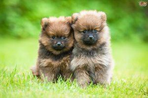 puppyphoto