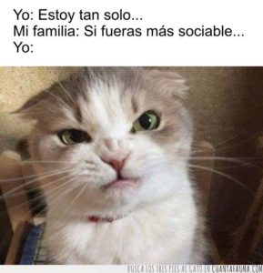 CF_69399_7ace5e4c35774233ae70c1f05730dfda_gatos_si_solo_fueras_un_poco_mas_sociable