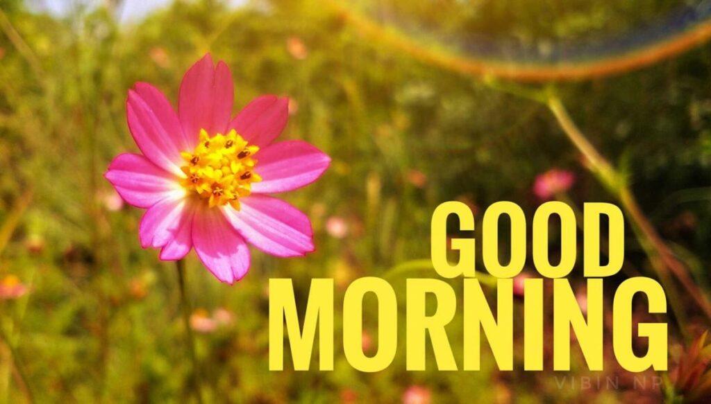 Good morning flower rose photo