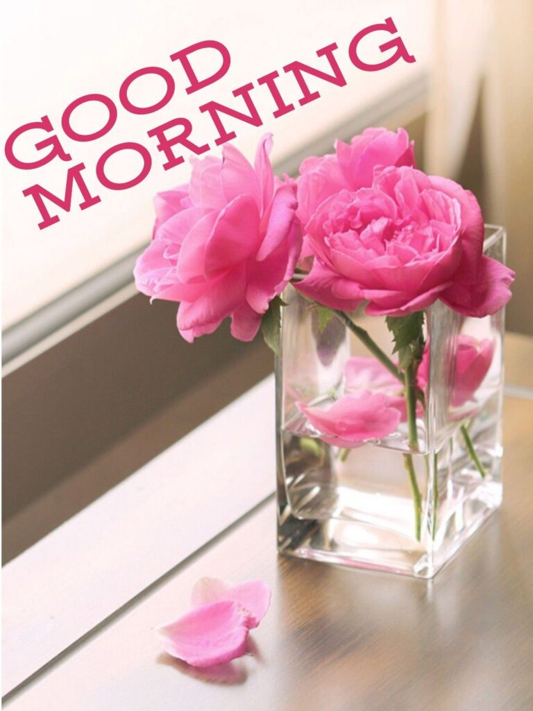 Good morning flowers free download for whatsapp video
