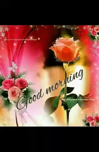 Good morning flower rose red