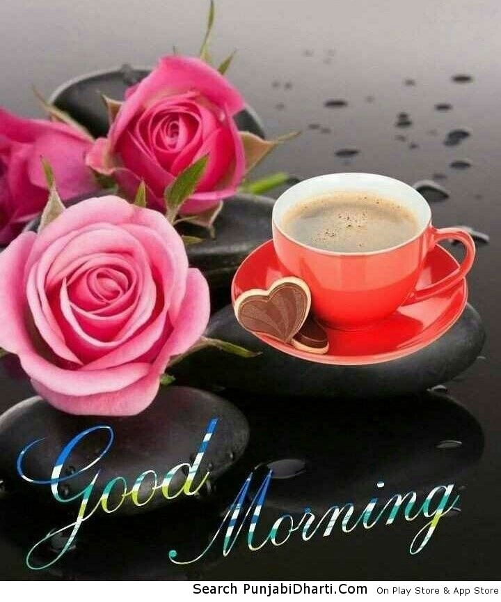 Good morning flowers free download for whatsapp