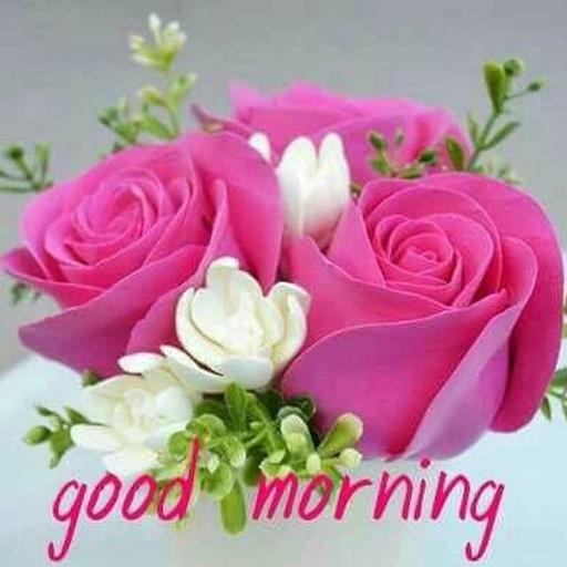 Good morning flowers quotes hd