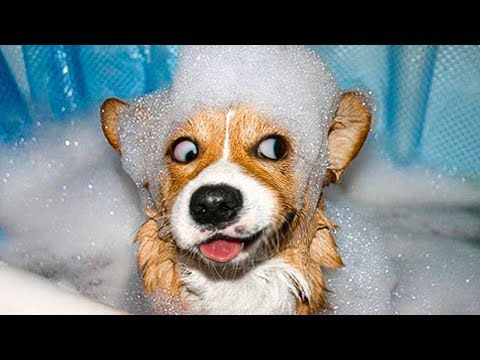 Funny dog pictures with words
