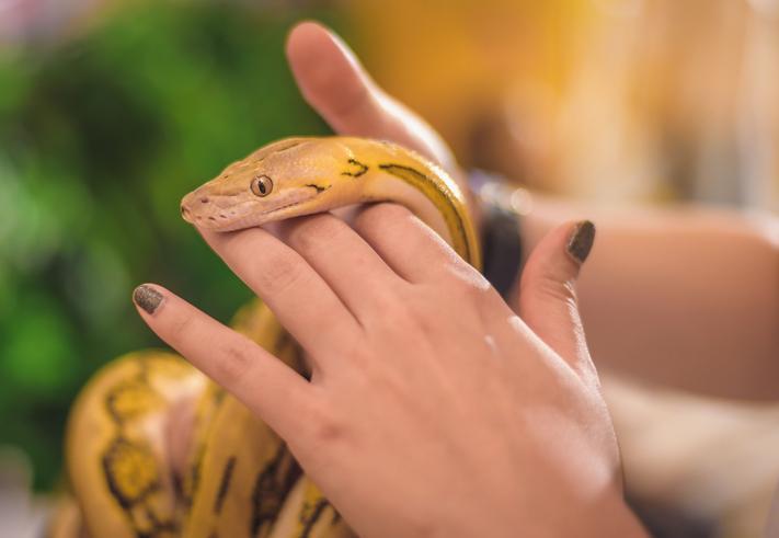 Que significa soñar con muchas serpientes grandes y pequeñas
