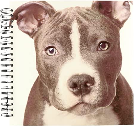 Como dibujar un perro pitbull